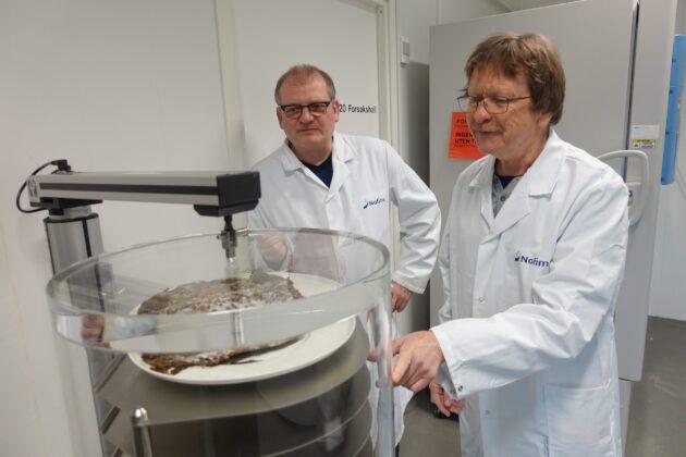 Tomater og erter er hovedproduktene som testes ut med nye tørkemetoder, men her tester Jan Thomas Rosnes (til høyre) ut tørking av tare sammen med forskerkollega Dagbjørn Skipnes.